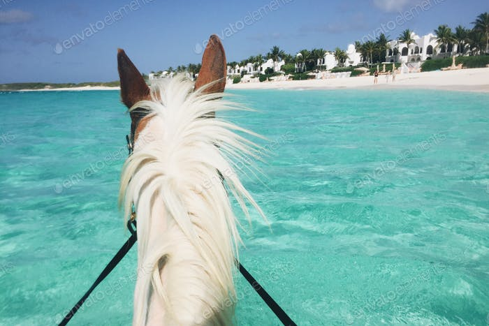Swimming with Horses in Paradise.
