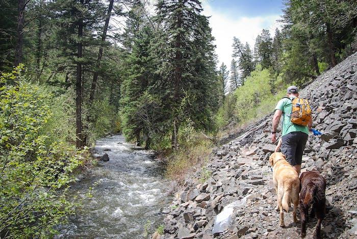 Senderismo con perros en el desierto de Montana