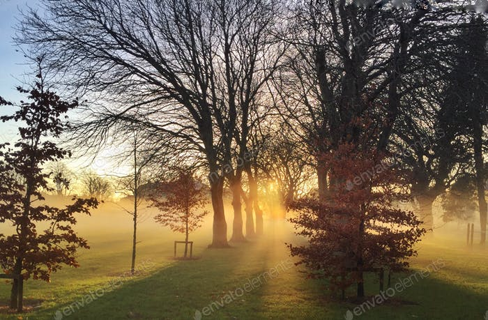 Winter sun rise in Ireland