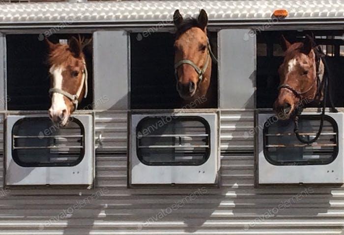 Pferde warten geduldig