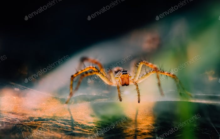 Close up view of spider on the web