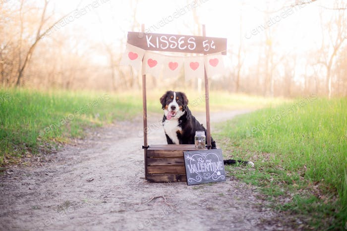 Puppy kissing booth