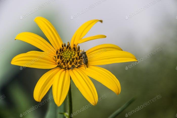Yellow flower & fellow
