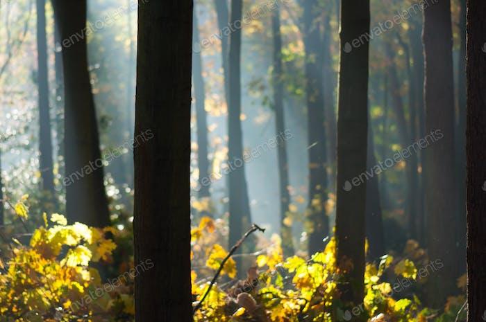 ein ruhiger Wald
