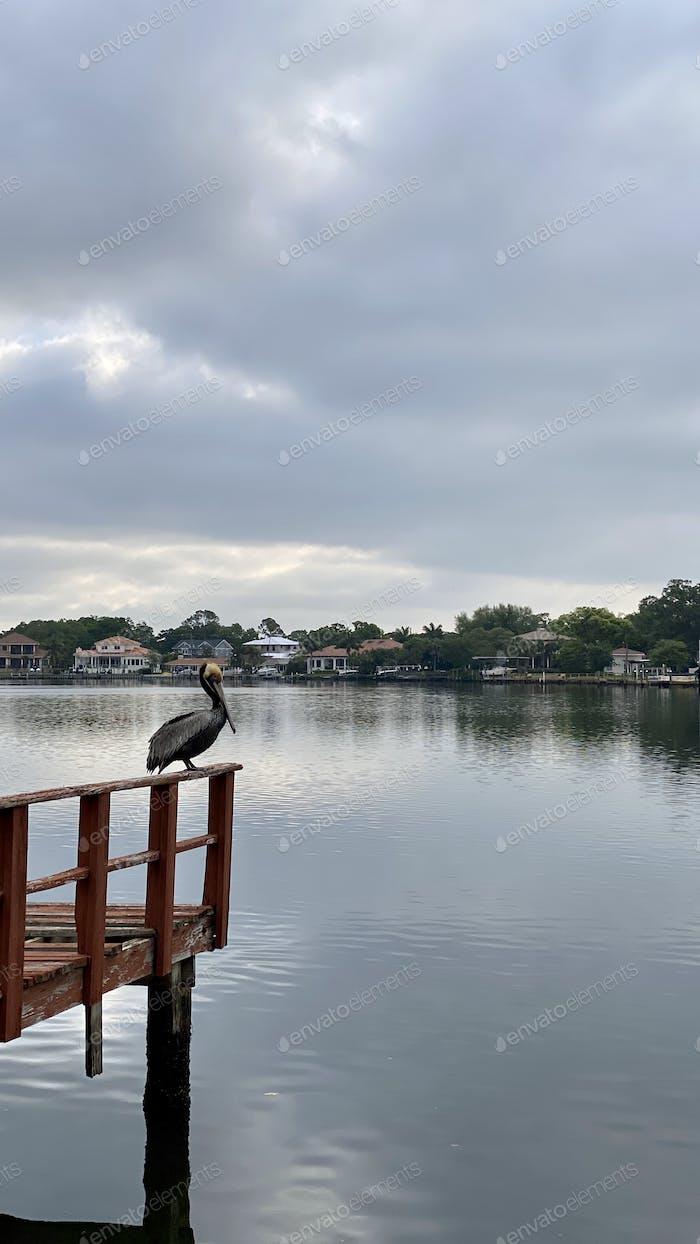 Пеликан отдыхает на лодочном причале в пасмурный день