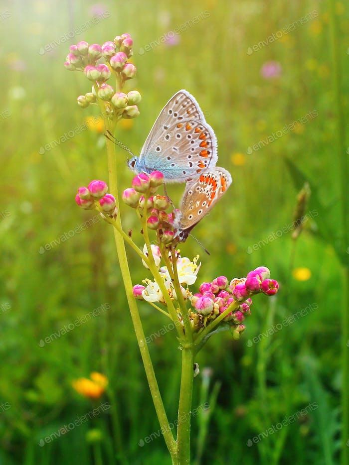 Schmetterlings-Effekt