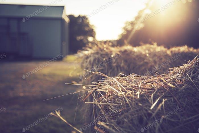 Farm Life | Wisconsin
