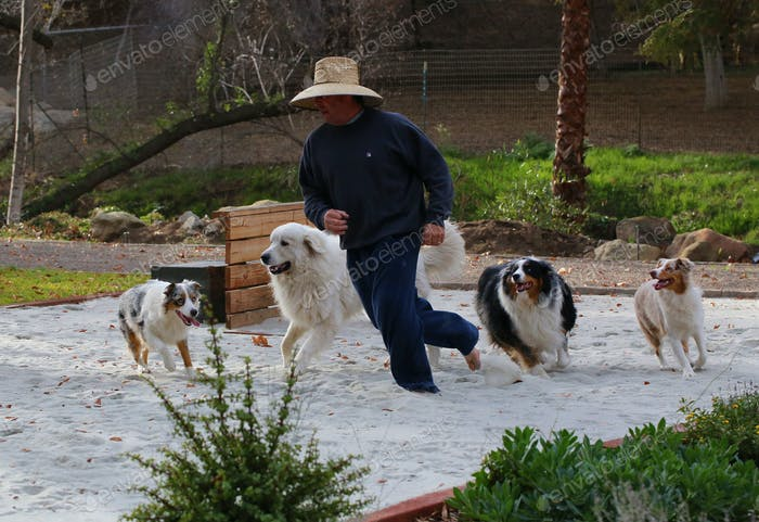 """People And Pets-Our version of """"running with the bulls"""""""