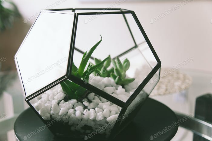 Our new terrarium, Isn't it lovely!?