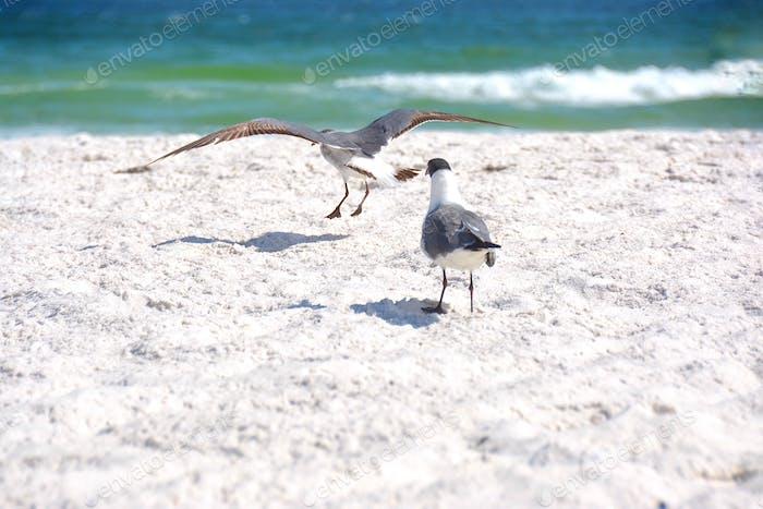 Take off seagulls