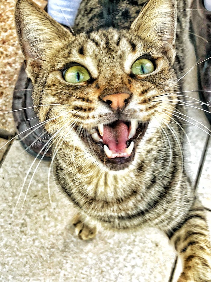 """""""MEOW!!"""" This kitty cat is king of the asphalt jungle and let's me know I'm in his domain!"""