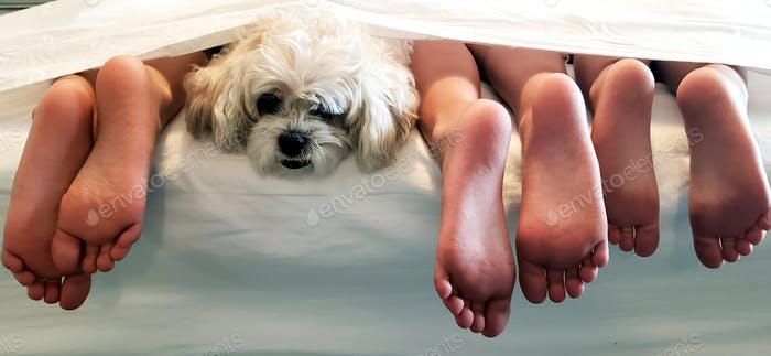 Poor dog still stuck with the feet thing, at least they quiet....sad dog, cute dog, cute pet, pet, d