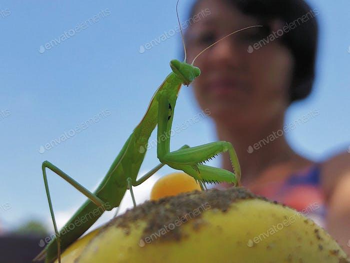 Beautiful, but deadly...Praying mantis...
