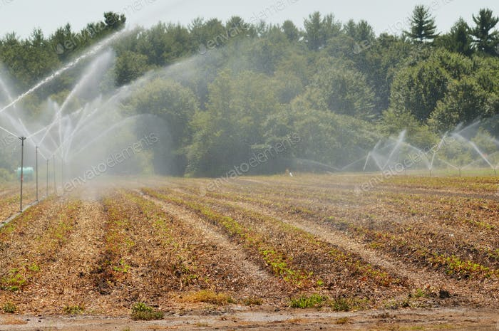 water conservation  spraying water on crops
