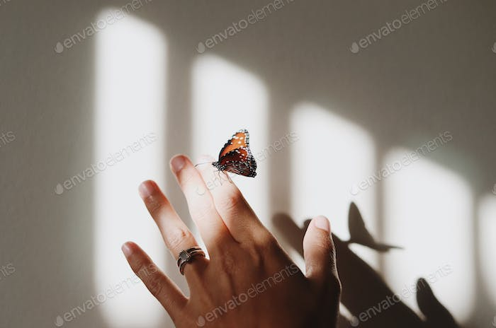 Butterfly resting on a hand in dappled light creating a shadow