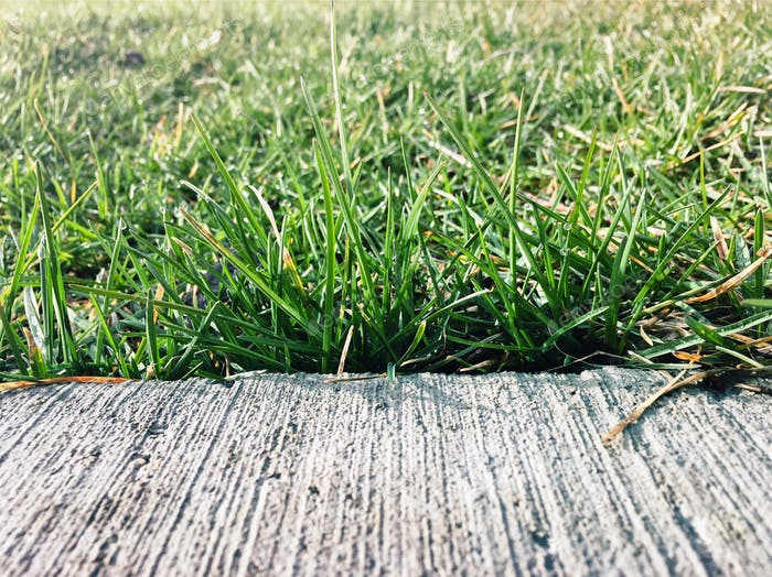 Down low looking at edge of paved sidewalk with grooves as it runs into green grass.