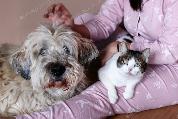 Big fluffy South Russian Shepherd Dog and white tabby cat on knees of their owner.
