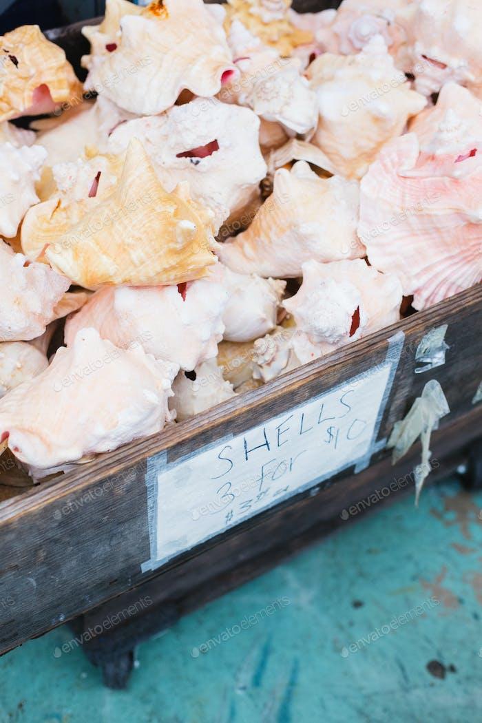 Bin of Sea Shells for Sale