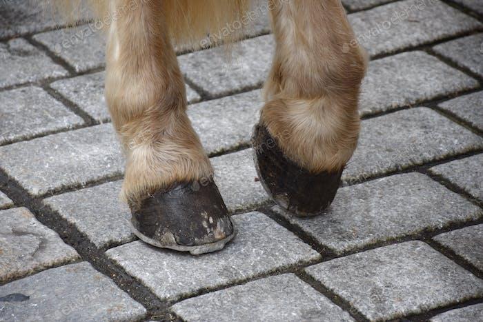 Horse legs and hoofs on concrete floor
