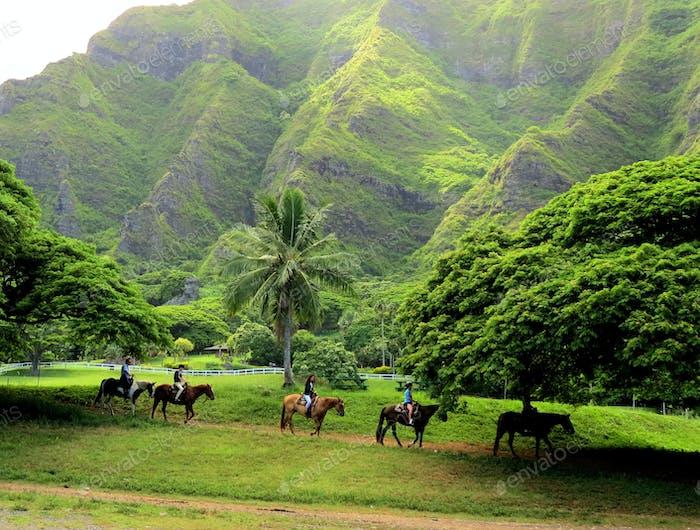 Exploring Hawaii on Horseback