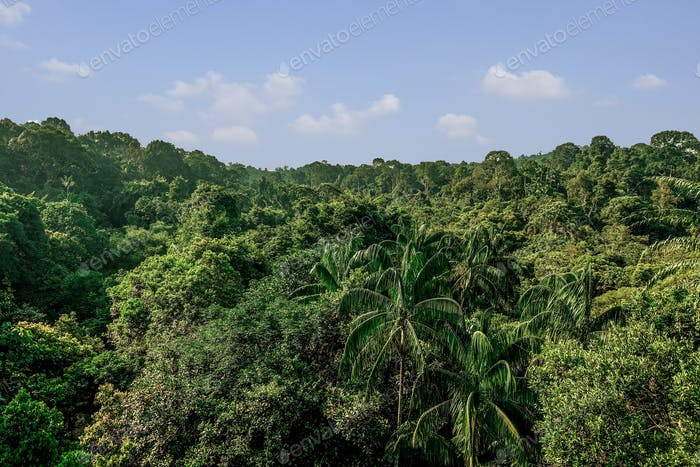 The jungle in Singapore