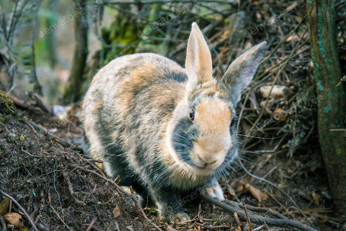 Wild feral bunny rabbit nature wildlife animal