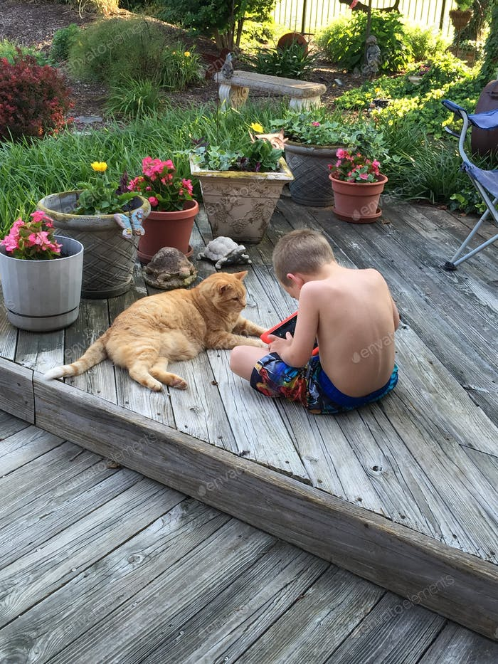 Teaching the cat