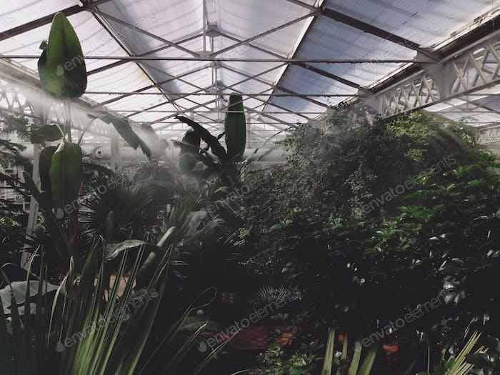 Tropische Umgebung in einem Gewächshaus