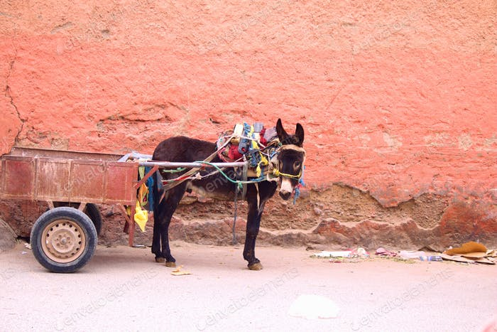 Donkey on the street in Morocco