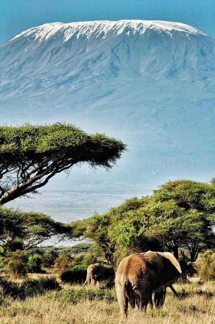 Awe inspiring beauty of Africa