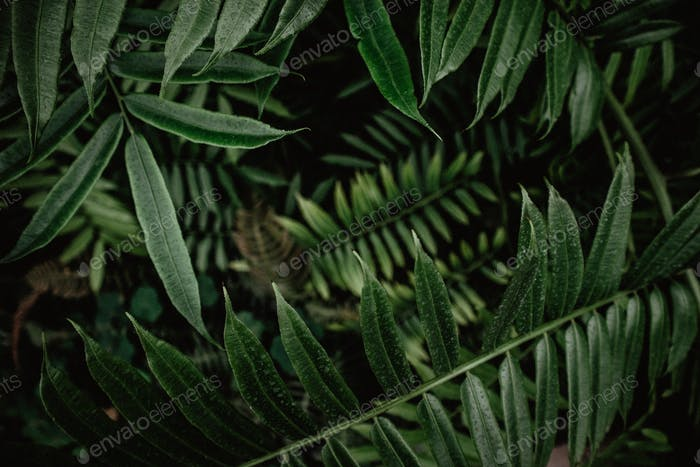 Moody plants for background