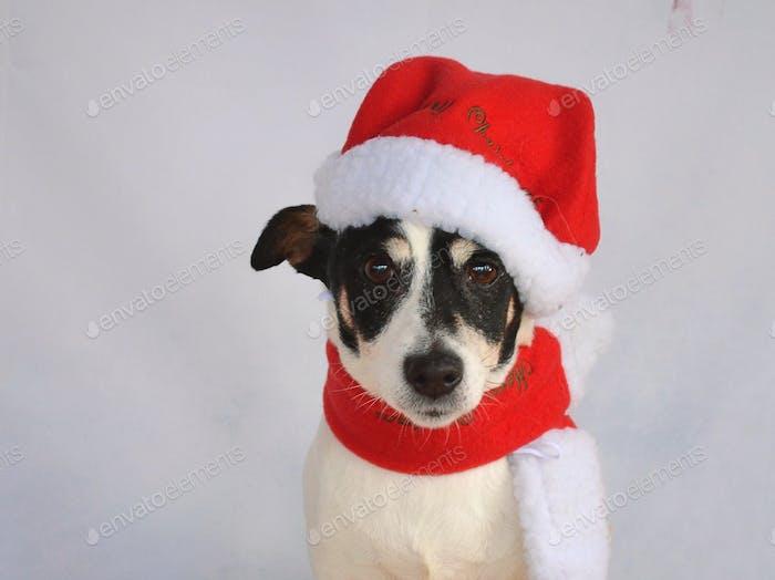 Weihnachtsmann Terrier