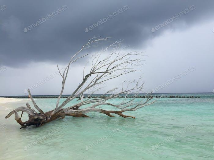 Malediven zusammengebrochen Baum