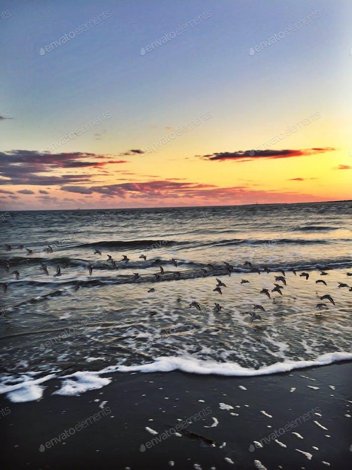 Seagulls flying over ocean