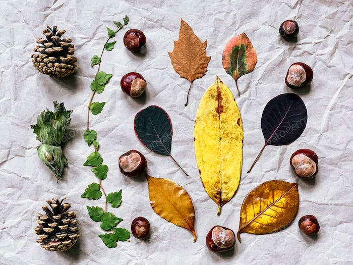 Autumn flat lay: collection of different colourful leaves, chestnut, pine cones, nuts on craft paper