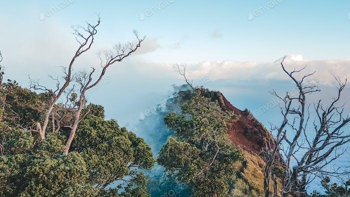 Erstaunliche Natur