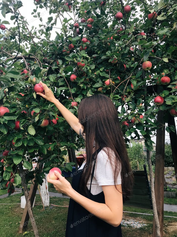 Girl is picking red apples in the end of summer. Green forests are around