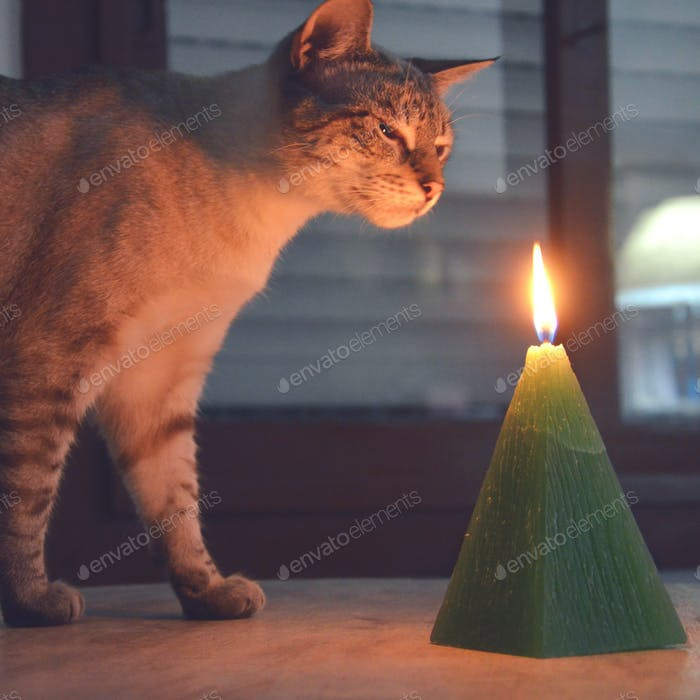 A tabby cat smelling a candle on fire