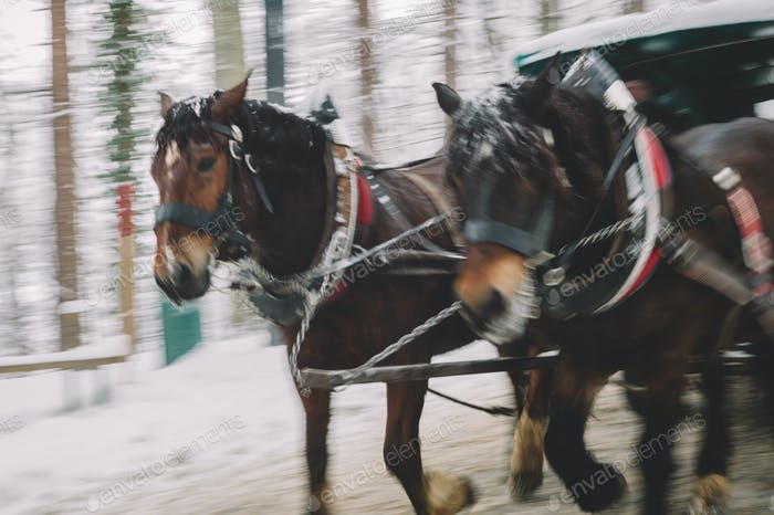 Horse carriage on the move