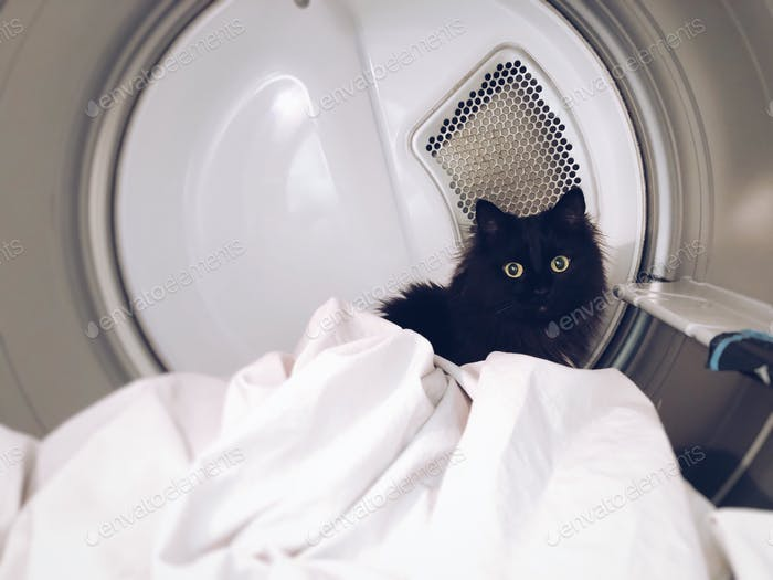 Silly cat climbed into a clothes dryer machine