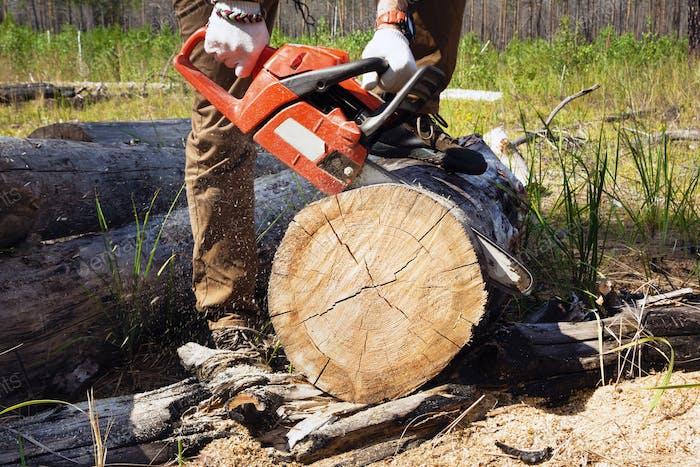 Работник лесорубов вырубает дрова в лесу с помощью профессиональной бензопилы.