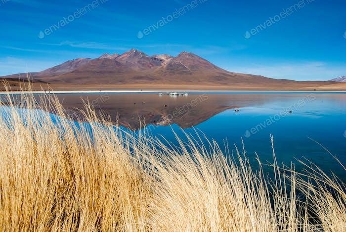 Hedionda lagoon