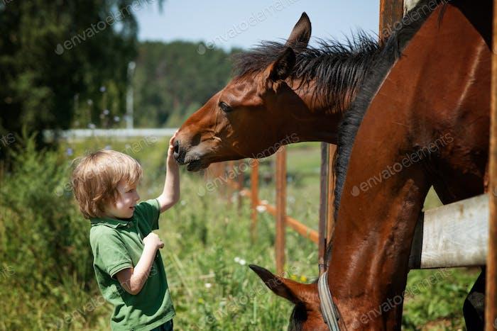 Preschooler boy feeding and petting the horses in summer day