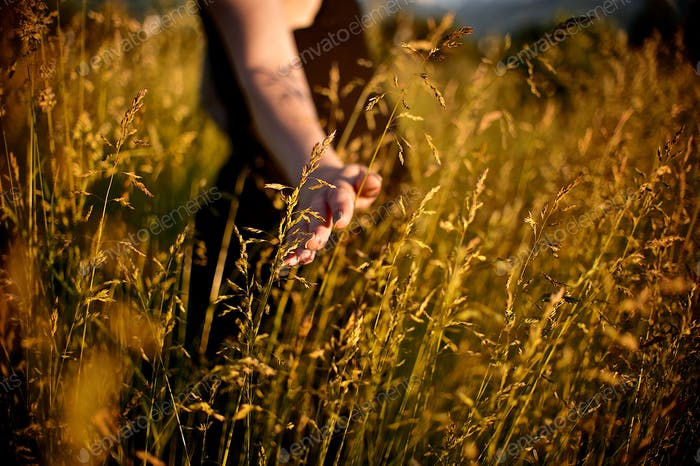 Countryside. Girl walks through the spikelet field