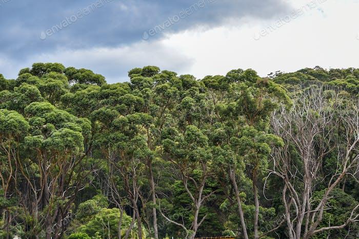 Windblown trees at Murramarang National Park, foreshadow a rainstorm.