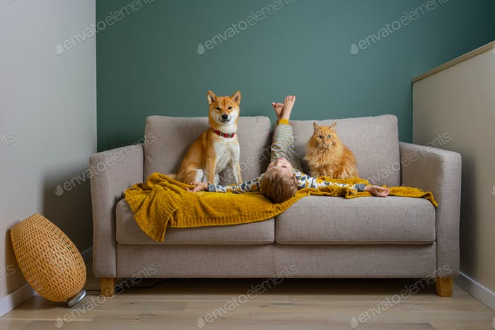 People on a couch. Cute boy and his best friends red dog and cat have fun on a couch