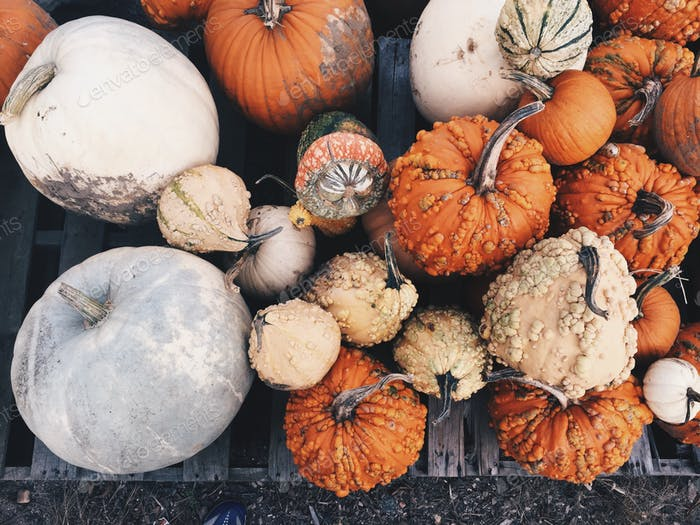 Funky pumpkins in color