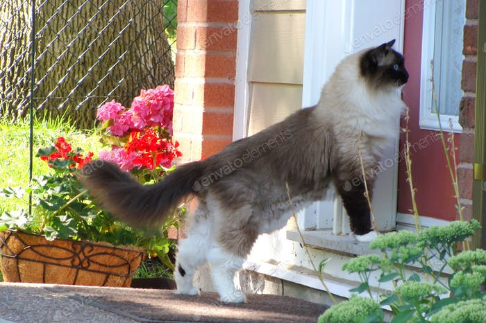 Cat is looking into the glass door to go home.