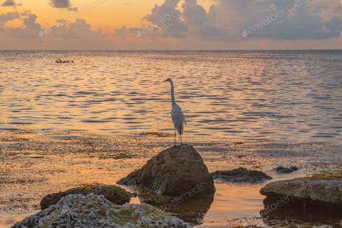 A white egret standing on a rock in the bay as the sun comes up