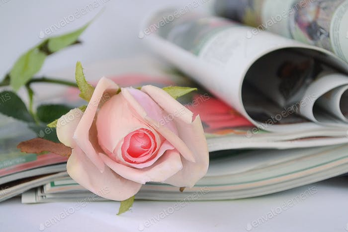 Magazines and a pink rose